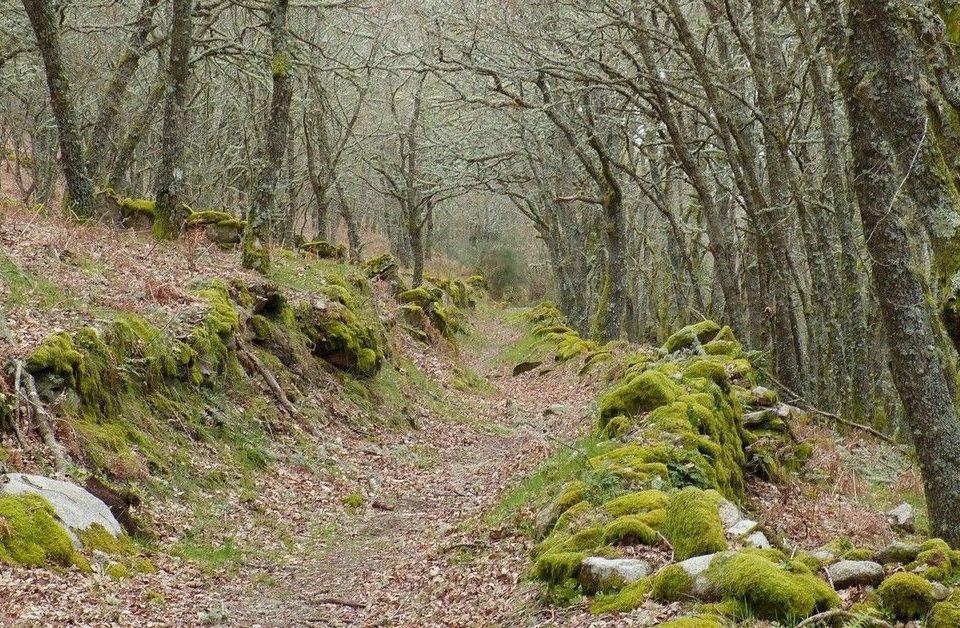 Reserva de la Biosfera de Allariz (Senderismo – Ourense)